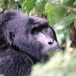 Oeganda – 2002