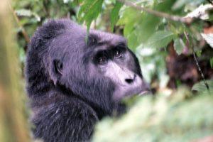 Lees meer over het artikel Oeganda – 2002